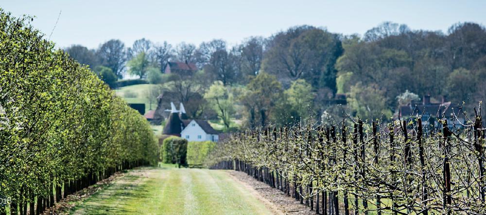 Wines of GB Vineyard